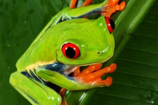Der Frosch  muß weg, 1996