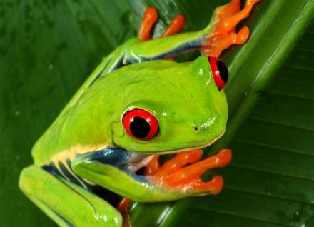 Der Frosch muß weg, Szenenfoto